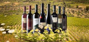 viniconvigneto2